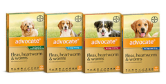 Advocate Dogs Bayer New Range